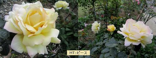 Horz_4