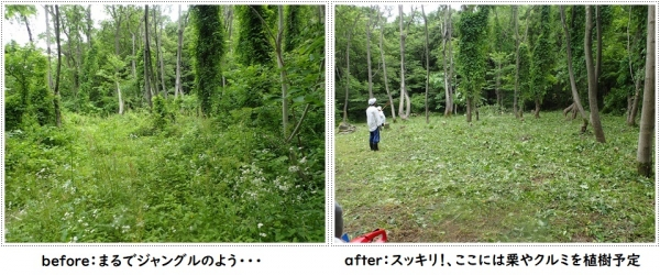 Beforeafter_1