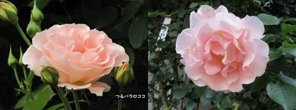 D_20190908193601
