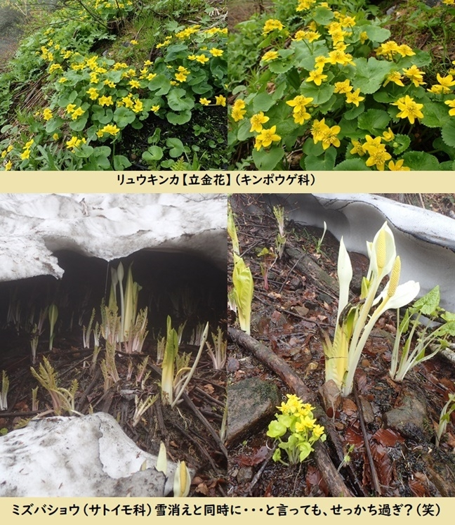 Photo_20190629042101
