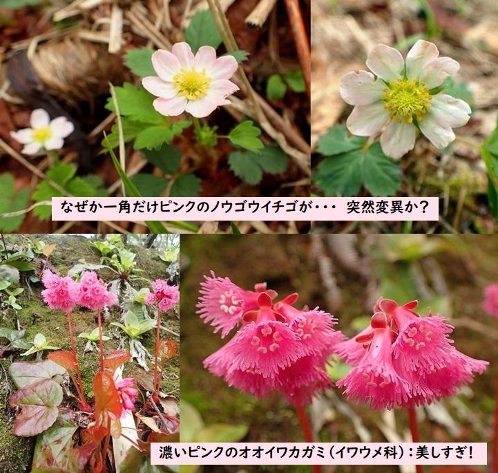 Photo_20190629042102