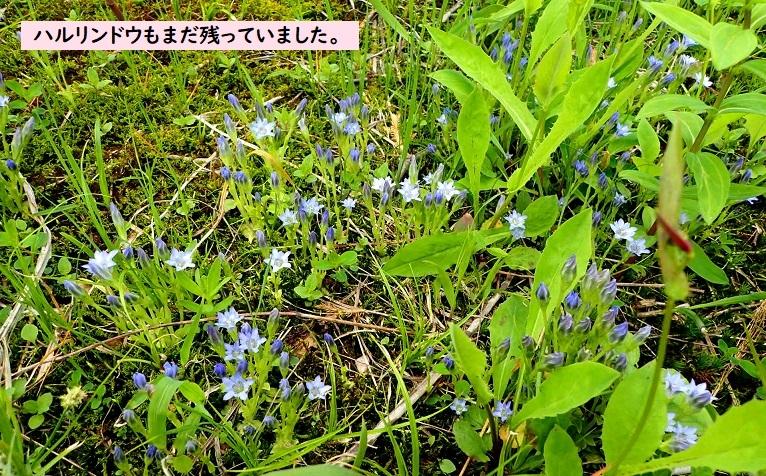Photo_20190711162902
