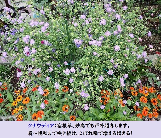 Photo_20190724215102
