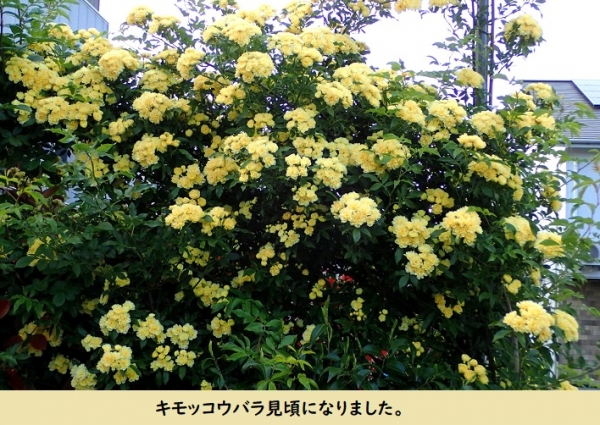 Photo_80